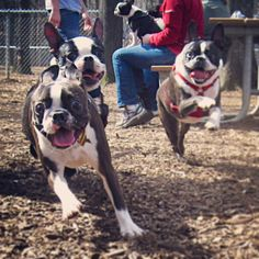 Play time in the bark park!
