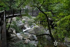 Sobaeksan National Park (소백산국립공원), Chungcheongdo's Korea100 Category : Nature, Natural Attractions, A national park Tour Information :  Sobaeksan Mountain (소백산) is renowned for its natural splendor and mystery, standing tall in the middle of the Korean peninsula, and offering several m..