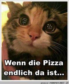 Die Pizza ist da