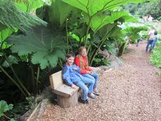Lost Gardens of Heligan, Cornwall mit Kindern, Riesenblätter