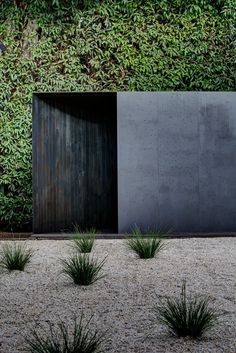 Green vertical garden living wall Pabellón Temporal Crescent House / Andrew Burns Architect