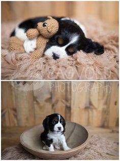 Fargo Pet Photographer Newborn Puppy Picture Fur Baby – Bea Be - Baby Animals Newborn Puppies, Baby Puppies, Cute Puppies, Cute Dogs, Cockapoo Puppies, Animals For Kids, Baby Animals, Cute Animals, Puppy Pictures