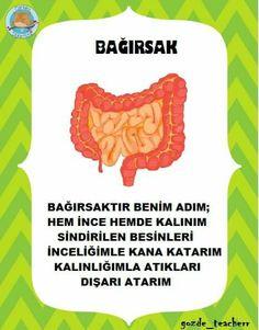 Sınıf Panosu İçin Classroom Board, Our Body, Human Body, Montessori, Homeschool, Crafts For Kids, Student, Science, Education