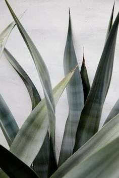 pretty palm leaves and pale greens