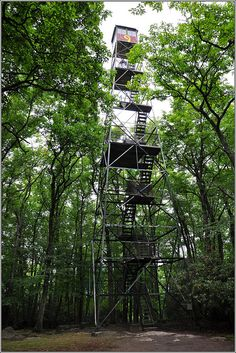 Yes, for about 5 secs and had to come down. That thing is rickety! PW: Cooks Forest PA - been to the top!