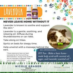 using lavender essential oils on dogs