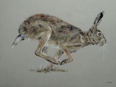 Pastel lièvre (Mammifères)