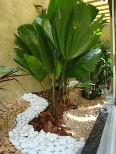 Reminds me of my G'ma Fala's backyard garden in Carson, Cal
