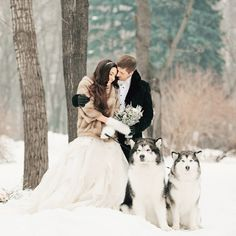 This utterly romantic (and oh so adorable) wedding photo in the snow has totally made our day! Photo by Konstantin Semenikhin #wedding #winter #snow #husky #winterbride #bride #coverup #shrug #coat #praisewedding