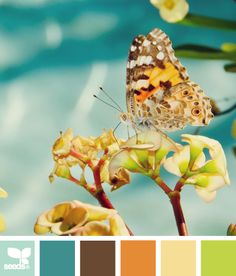 Butterfly Hues - http://design-seeds.com/index.php/home/entry/butterfly-hues1