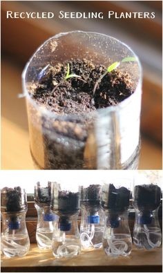 Recycled Pop Bottle Seedling Planters