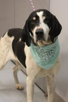 ADOPTED>NAME: Todd  ANIMAL ID: 34768452  BREED: Hound  SEX: male(neutered)  EST. AGE: 8 yr  Est Weight: 56 lbs  Health: Heartworm neg  Temperament: dog friendly ,people friendly  ADDITIONAL INFO: RESCUE PULL FEE: $35  Intake date: 3/2  Available: Now