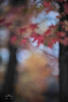 gazing through Desktop Background Pictures, Blur Background In Photoshop, Background Images For Editing, Light Background Images, Photo Background Images, Picsart Background, Photo Backgrounds, Blur Photography, Photography Studio Background