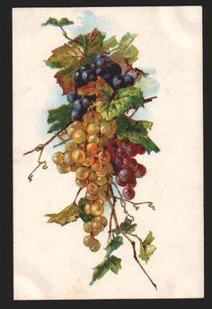 vintage grape postcard