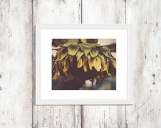 This photography of a droopy sunflower was taken during a summer walk. This would look lovely hanging in your living room, bedroom, kitchen or