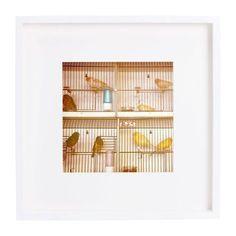 "Alicia Bock ""Marché aux Oiseaux II"" Framed Print on Chairish.com"