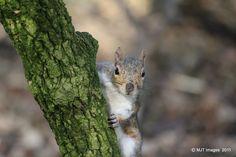Squirrel.  We take care of injured wildlife.