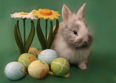Warum verstecken laut Osterbrauch eigentlich Hasen statt Hühner die Ostereier?