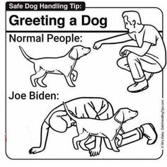 The authors of best-selling Safe Baby Handling Tips™ offer free how-to instructions for life's challenges. Feel not-stupid today. Funny Quotes, Funny Memes, Hilarious, Baby Handling, Creepy Joe Biden, Jokes Pics, Memes Of The Day, Animal Memes, Animal Funnies