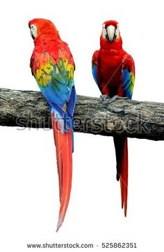 Parrot Bird on Dead Branch isolated Images, Backgrounds, Patterns