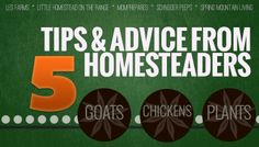 Great tips from five homesteaders, and things to watch out for!