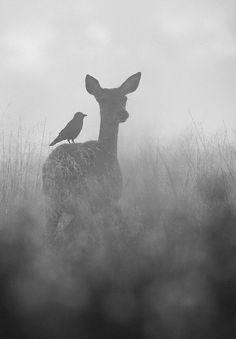 deer black and white ile ilgili görsel sonucu