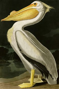 Pelican wall mural