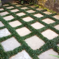 Front terrace garden in Surry Hills.  Flagstones and grass.