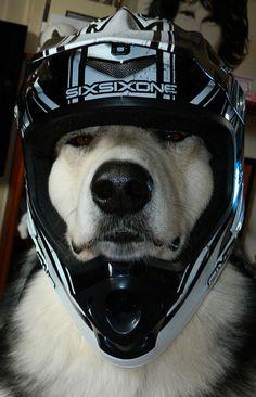 Downhill Dog
