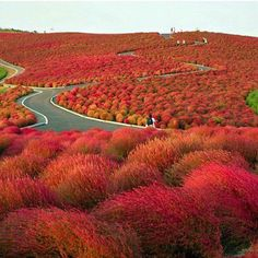 Hitachi Seaside Park (Japan)