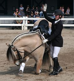 Norwegian Fjord Horse Takes a Bow by Lance and Erin, via Flickr