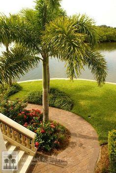 Foxtail palm Sunset Landscape, Garden Landscape Design, Easy Garden, Home And Garden, Small Pools, Garden Borders, Tropical Garden, Front Yard Landscaping, Palm Trees