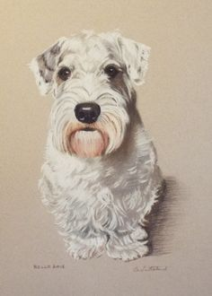 Rollo - pastel portrait of a Sealyham Terrier by Cat Sutherland