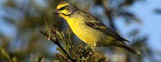 En Europa: drástica reducción en comercio de aves