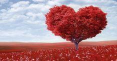 Dragostea este cel mai frumos sentiment pe care îl poate avea o persoană. Fiecare persoană iubește în felul ei și de aceea ajungem de cele