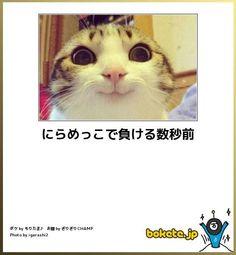 Funny Animal Memes, Funny Animals, Cute Animals, I Love Cats, Cool Cats, Black Jokes, Funny Cute Cats, Kawaii Cat, Funny Comics