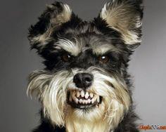 собака кусака