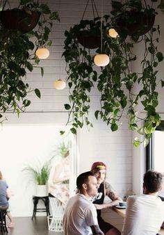 Plantas colgantes #Ideas para #decorar con #plantas #home_plants