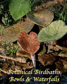 Make Your Own Bird Bath | custom Botanical Waterfall like this can be created in YOUR garden