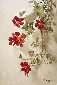 Alfred RENAUDIN (1866 - 1944) - Nasturtiums.