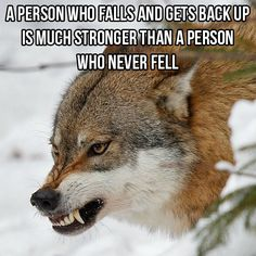Wolg Wolf Qoutes, Lone Wolf Quotes, Wolf Pack Quotes, Wise Quotes, Great Quotes, Funny Quotes, Inspirational Quotes, Karma Quotes, Motivational Sayings