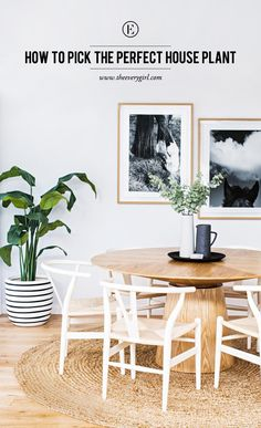 How to Pick the Perfect House Plant #theeverygirl