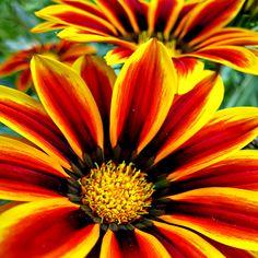 summer is coming by dukeofspade.deviantart.com