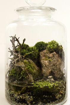 Palidarium terrarium
