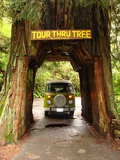 Southern Oregon, Redwood Forest