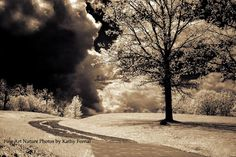 "Nature Photography - Dreamy Surreal Gothic Black Sepia Nature, Haunting Dark Spooky Clouds, Fine Art Photography 8"" x 12"". $30.00, via Etsy."