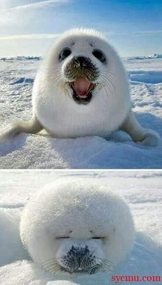 Happy little seal