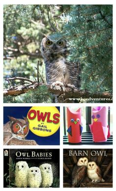 Whoo's Up for Owl Fun!, DIY and Crafts, {Whoo& Up for Owl Fun} 20 Owl books, crafts & activities for kids! Craft Activities For Kids, Preschool Activities, Crafts For Kids, Nature Activities, Insect Activities, Outdoor Activities, Owl Kids, Kids Fun, Owl Classroom