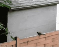27 Gifs Of Animals Who Aren't Great At Jumping