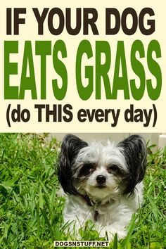 My dog eats grass! is it normal? How can I stop my dog from eating grass? #mydogeatsgrass #dogeatsgrass #dogtips Dogs Eating Grass, Dog Eating, Online Dog Training, Training Your Dog, Happy Animals, Animals And Pets, Best Dog Food Brands, Sick Dog, Dog Owners